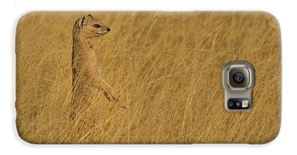 Meerkat Galaxy S6 Case - Sentinel by Linda Oliver
