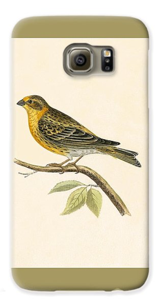 Serin Finch Galaxy S6 Case by English School