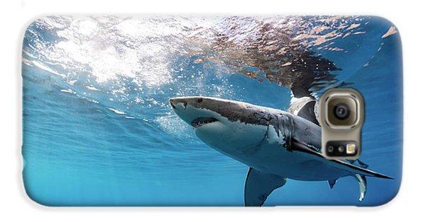 Shark Rays Galaxy S6 Case by Shane Linke