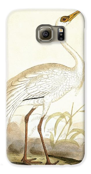 Siberian Crane Galaxy S6 Case by English School