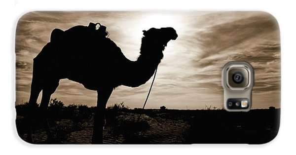 Desert Galaxy S6 Case - Silhouetted Camel, Sahara Desert, Douz by David DuChemin