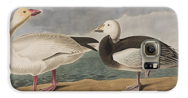 Snow Goose Galaxy S6 Case by John James Audubon