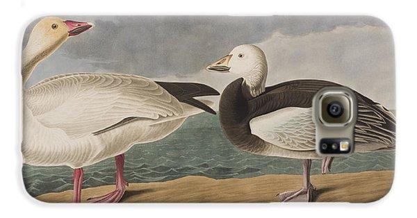 Snow Goose Galaxy S6 Case by John James Audubon