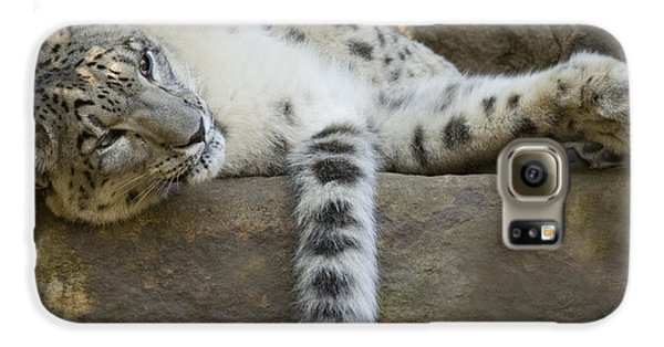 Snow Leopard Nap Galaxy S6 Case by Mike  Dawson