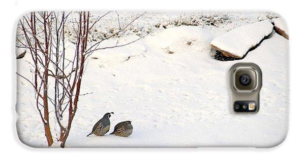 Snow Quail Galaxy S6 Case
