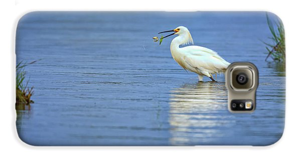 Snowy Egret At Dinner Galaxy S6 Case by Rick Berk