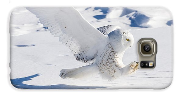 Snowy Owl Pouncing Galaxy S6 Case