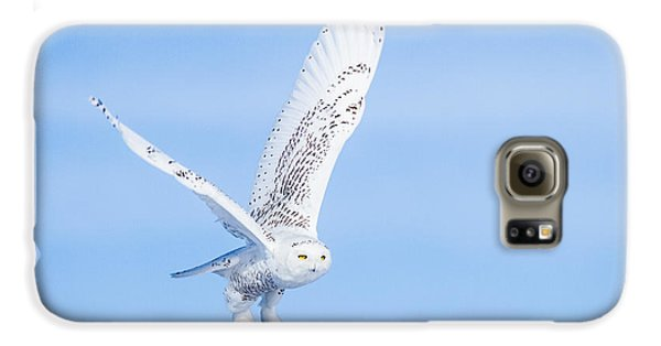 Snowy Owls Soaring Galaxy S6 Case