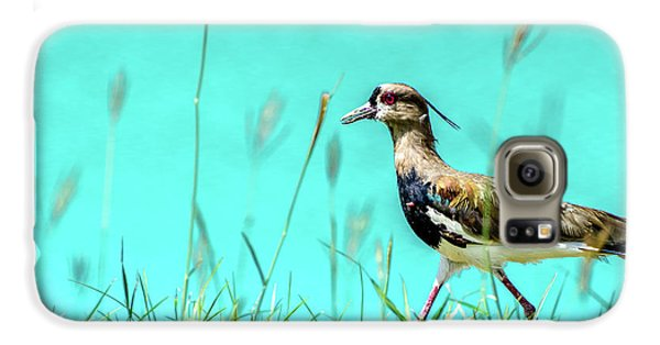 Southern Lapwing Galaxy S6 Case