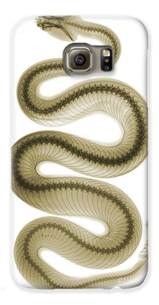Viper Galaxy S6 Case - Southern Pacific Rattlesnake, X-ray by Ted Kinsman