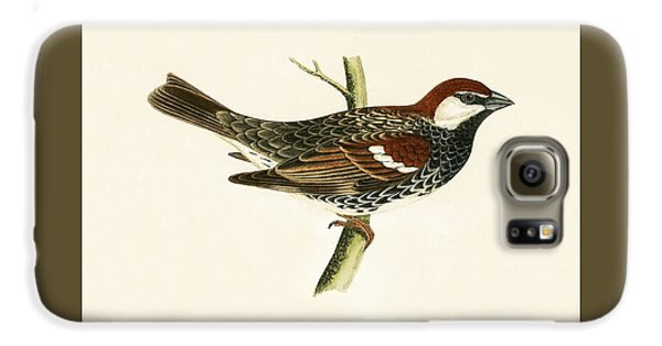 Spanish Sparrow Galaxy S6 Case by English School