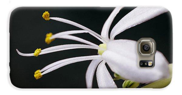 Spider Plant Flower Galaxy S6 Case