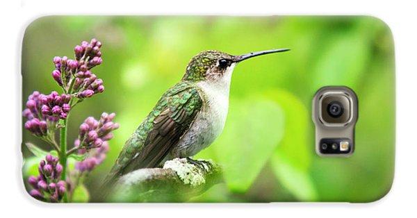 Spring Beauty Ruby Throat Hummingbird Galaxy S6 Case by Christina Rollo
