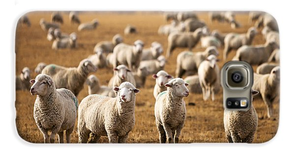 Sheep Galaxy S6 Case - Standing Out In The Herd by Todd Klassy