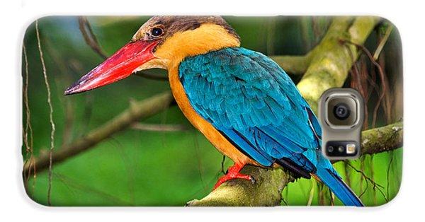 Stork-billed Kingfisher Galaxy S6 Case