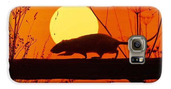 Stranglers Rattus Norvegicus Rat Galaxy S6 Case