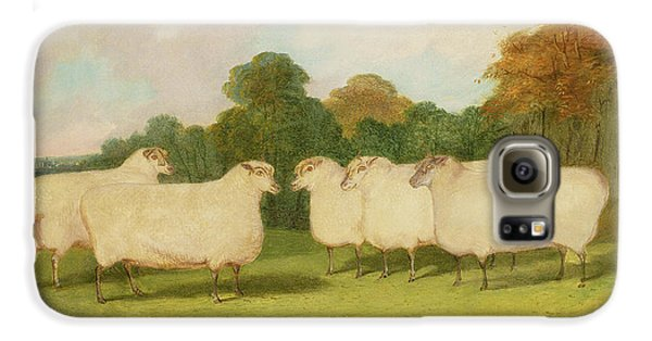 Sheep Galaxy S6 Case - Study Of Sheep In A Landscape   by Richard Whitford