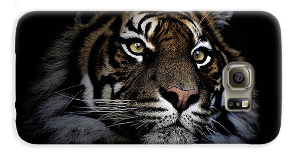 Sumatran Tiger Galaxy S6 Case by Avalon Fine Art Photography