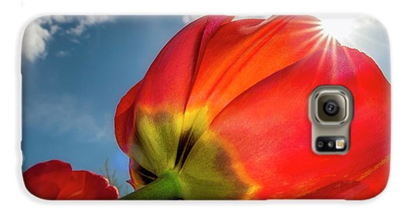 Galaxy S6 Case featuring the photograph Sunbeams And Tulips by Adam Romanowicz