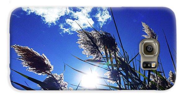 Sunburst Reeds Galaxy S6 Case