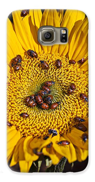 Sunflower Covered In Ladybugs Galaxy S6 Case