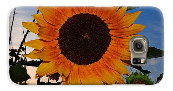 Sunflower In The Evening Galaxy S6 Case