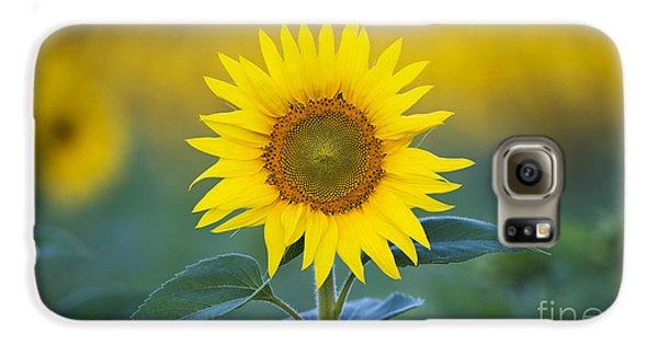 Sunflower Galaxy S6 Case - Sunflower by Tim Gainey