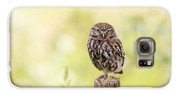 Sunken In Thoughts - Staring Little Owl Galaxy S6 Case by Roeselien Raimond