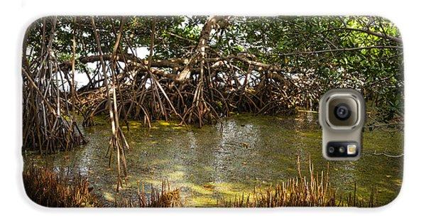 Mangrove Galaxy S6 Case - Sunlight In Mangrove Forest by Elena Elisseeva