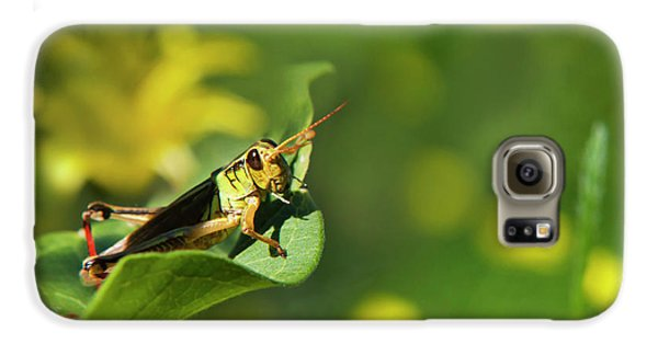 Green Grasshopper Galaxy S6 Case by Christina Rollo