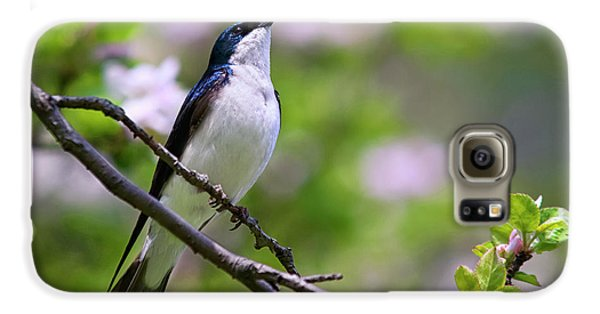 Swallow Song Galaxy S6 Case by Christina Rollo