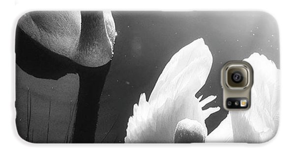 Galaxy S6 Case - Swan Lake In Winter -  Kingsbury Nature by John Edwards
