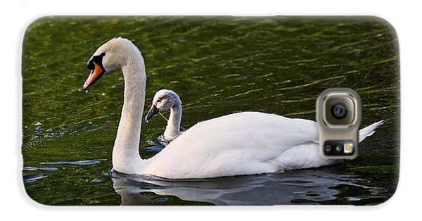 Swan Mother With Cygnet Galaxy S6 Case
