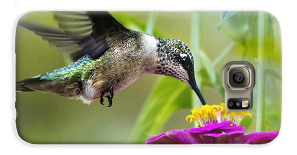 Sweet Success Hummingbird Square Galaxy S6 Case