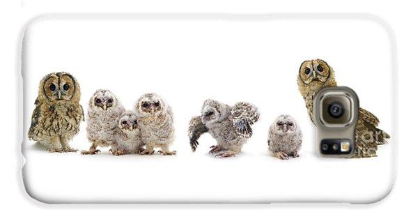 Tawny Owl Family Galaxy S6 Case