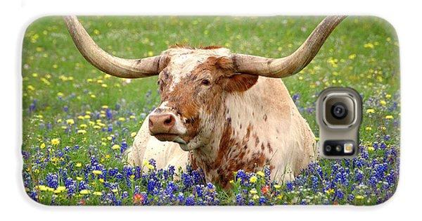 Texas Longhorn In Bluebonnets Galaxy S6 Case