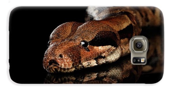 The Boa Constrictors, Isolated On Black Background Galaxy S6 Case by Sergey Taran