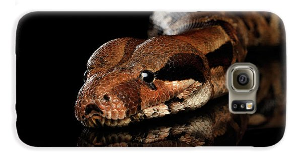 The Boa Constrictors, Isolated On Black Background Galaxy S6 Case