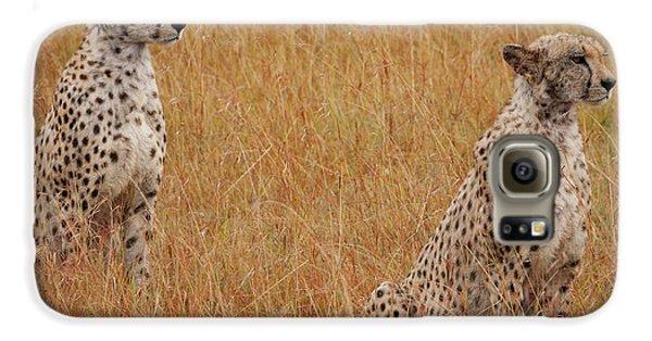The Cheetahs Galaxy S6 Case by Nichola Denny