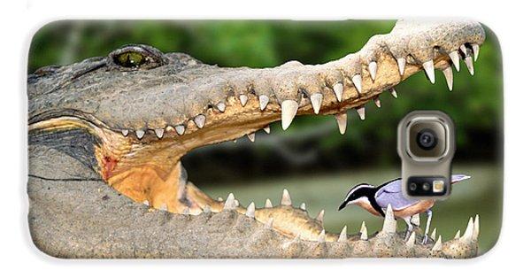 The Crocodile Bird Galaxy S6 Case