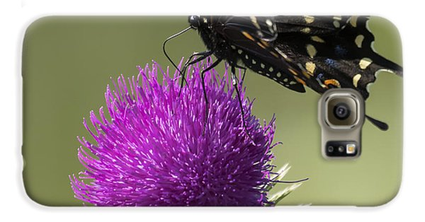 The Eastern Black Swallowtail  Galaxy S6 Case