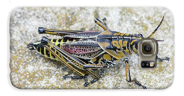 The Hopper Grasshopper Art Galaxy S6 Case by Reid Callaway