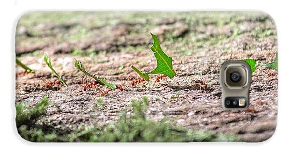 The Leaf Parade  Galaxy S6 Case by Betsy Knapp