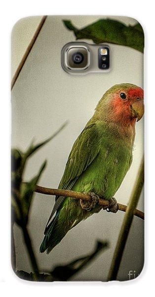 The Lovebird  Galaxy S6 Case by Saija  Lehtonen