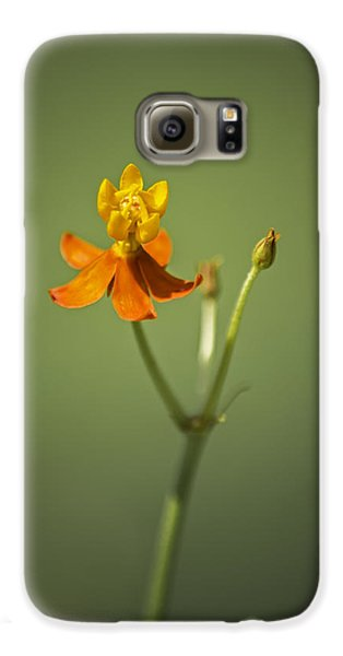 The One - Asclepias Curassavica - Butterfly Milkweed Galaxy S6 Case by Johan Hakansson