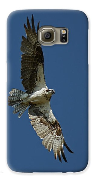 The Osprey Galaxy S6 Case by Ernie Echols