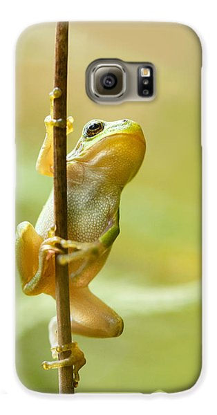 The Pole Dancer - Climbing Tree Frog  Galaxy S6 Case by Roeselien Raimond