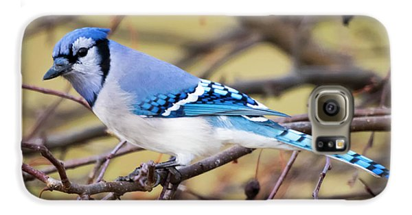 The Winter Blue Jay  Galaxy S6 Case