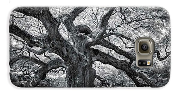 Galaxy S6 Case - This Tree Is Located In Charleston by Jon Glaser