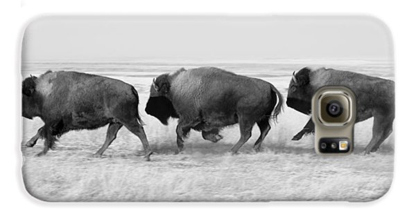 Three Buffalo In Black And White Galaxy S6 Case by Todd Klassy